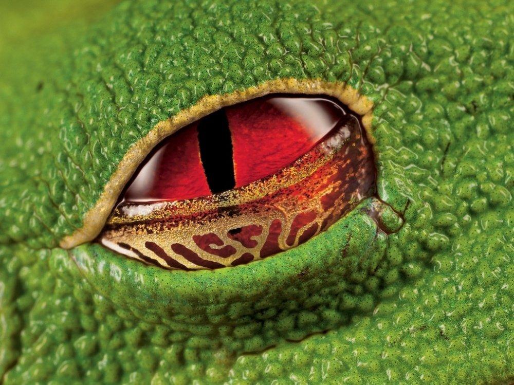 kurbaga-gozu-kostarika