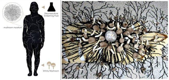 mushroom-deathsuit